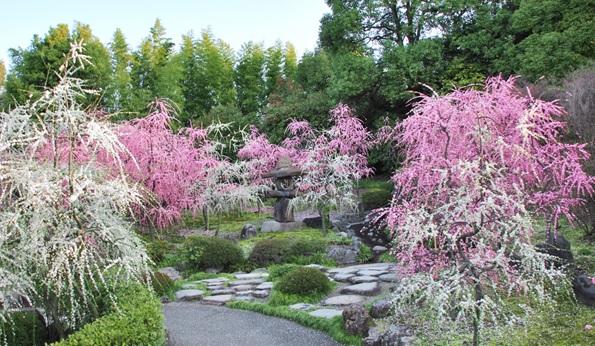 城南宮メニュー神苑の特長中根金作氏の作庭趣の異なる庭園茶席 楽水軒